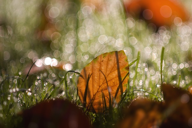 Herbstlaub auf Rasen
