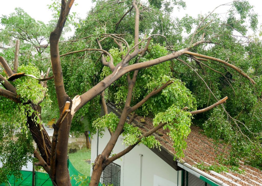 Sturmschäden - umgestürzter Baum